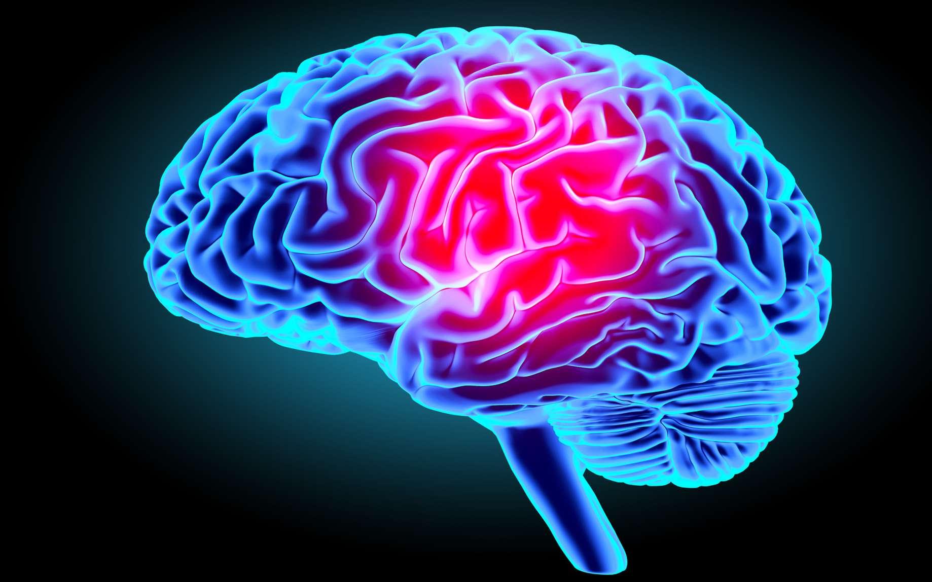 cerveau et nicotine